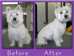 Dog Grooming On Maui